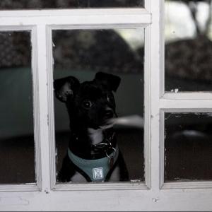 Molly looking through cabin window