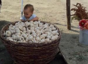 Young patron of Hills Garlic Fest examines a basket of garlic
