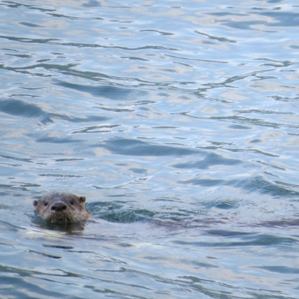 Otter at Serenity Views