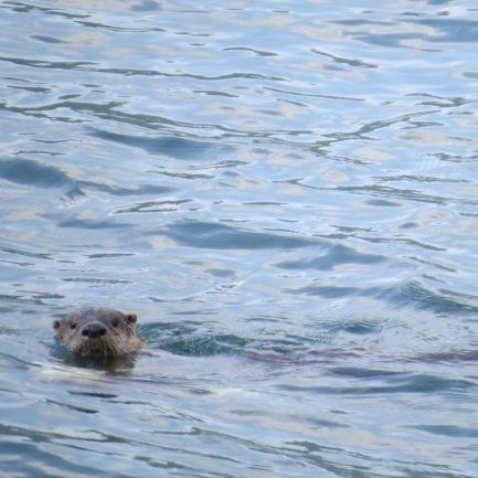 Otter at Serenity Views