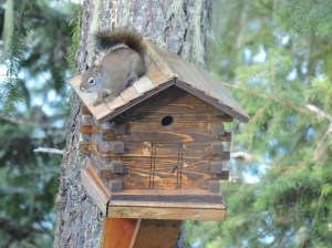 Squirrel on birdhouse