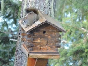 Squirrel on birdhouse