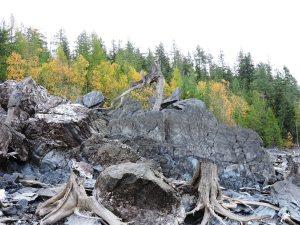 Fall views on shoreline